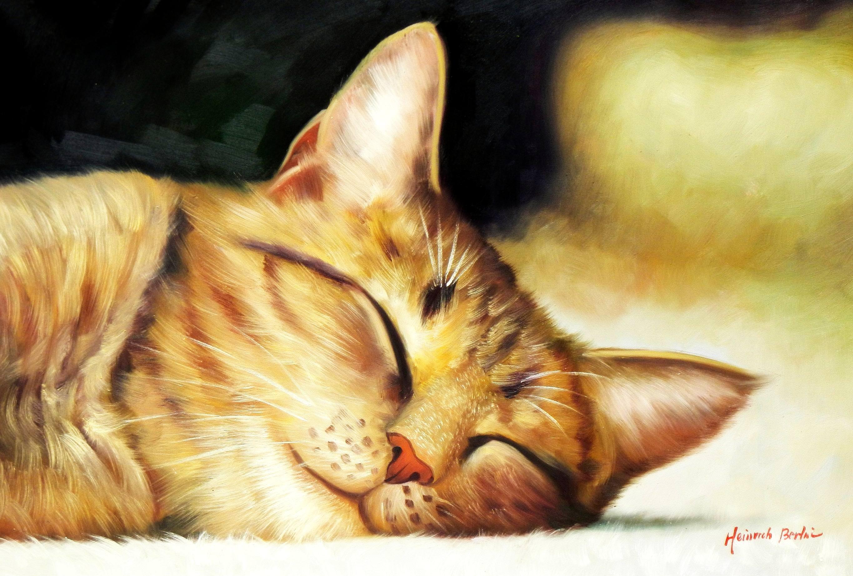 Modern Art - Gesicht einer träumenden Katze d93381 60x90cm brilliantes Ölbild